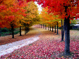 Image: Autumn's Red!