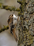 The Creep.. by biffobear, photography->birds gallery