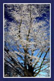 Wintertime 3 (of 4), Tree by corngrowth, Photography->Nature gallery