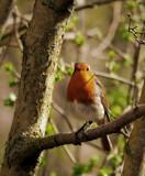 Watching me watching him by biffobear, photography->birds gallery