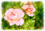 Painted Roses by LynEve, photography->manipulation gallery