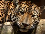 Just a little bit closer... by Paul_Gerritsen, Photography->Animals gallery