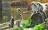 Kattas by boremachine, Photography->Animals gallery