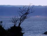 Lone Tree by jrasband123, Photography->Sunset/Rise gallery