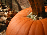 Fall Pumpkin by Andrewman38, Photography->Still life gallery