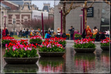 Amsterdam Tulip Festival 11 by corngrowth, photography->city gallery