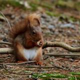 Hi by biffobear, photography->animals gallery