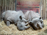 Sleeping Beauties #1 by braces, Photography->Animals gallery
