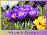 """""""HAPPY EASTER EVERYONE"""" by icedancer, photography->flowers gallery"""