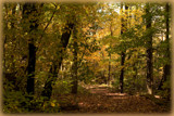 Autumn Walk by theradman, photography->nature gallery