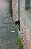 Peeking Around by avedeloff, photography->pets gallery
