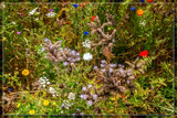Wildflower Jungle by corngrowth, photography->nature gallery
