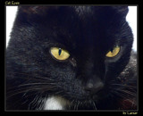Cat Eyes by Larser, Photography->Pets gallery