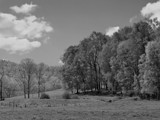 In Black and White Pasture by bfrank, contests->b/w challenge gallery