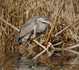 Twisting by biffobear, photography->birds gallery