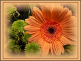 Orange Cheer by LynEve, Photography->Flowers gallery