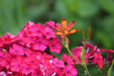 A Splash of Color by Pistos, photography->flowers gallery