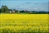 Yellow Pancake by corngrowth, photography->landscape gallery