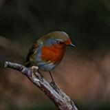Rockin by biffobear, photography->birds gallery