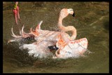 Bathtime by mmynx34, Photography->Birds gallery