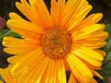 Gerbera by kidder, Photography->Flowers gallery