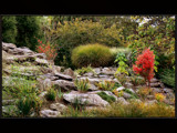 Autumn Shades #5 by LynEve, Photography->Gardens gallery
