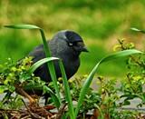 Carlos by biffobear, photography->birds gallery