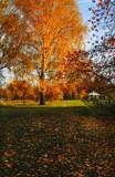 Golden Rain by biffobear, photography->landscape gallery
