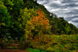 Derwent Walk Two by biffobear, photography->landscape gallery
