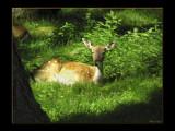 Bambi by MarianaEwa, Photography->Animals gallery