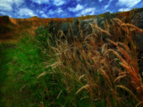 Grasses by a dry stone wall by biffobear, photography->nature gallery
