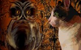 The Owl & The Pussycat by mesmerized, photography->manipulation gallery