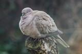 SleepingBeauty by twinkel, photography->birds gallery