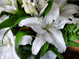 Christmas Lilies - Heaven's scent :) by LynEve, photography->flowers gallery
