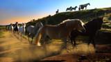 THUNDEROUS HOOVES by LANJOCKEY, photography->animals gallery