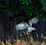 Back of by biffobear, photography->birds gallery