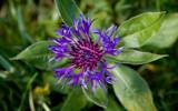 Purple by slybri, Photography->Flowers gallery