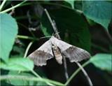 A Garden Giant by tigger3, photography->butterflies gallery