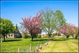 Rural Spring 7 by corngrowth, photography->landscape gallery