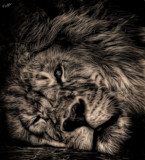 The Lion King by tigger3, contests->b/w challenge gallery