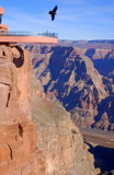 Hawk Over The Skywalk-Grand Canyon West by Zava, photography->mountains gallery