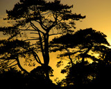 NATURE'S SILHOUETTES by LANJOCKEY, Photography->Sunset/Rise gallery