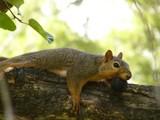 Sometimes I feel like a nut... by gabegarwick, Photography->Animals gallery