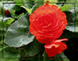 Deep Orange by trixxie17, photography->flowers gallery