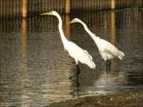 Island Birds VI by allisontaylor, Photography->Birds gallery