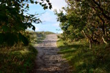 Forest path to the beach by joypie, photography->landscape gallery