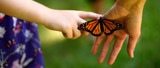 Monarch Release #7 by tigger3, photography->butterflies gallery