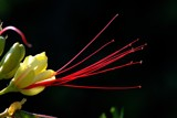 A different kind of flower by elektronist, photography->flowers gallery