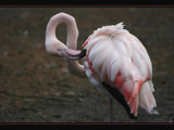 Bend it, shape it, anyway you want it... by JQ, Photography->Birds gallery