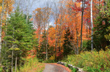 Fall Colours In Northern Ontario #1 by icedancer, photography->landscape gallery